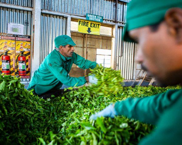 Travailleurs de plantation